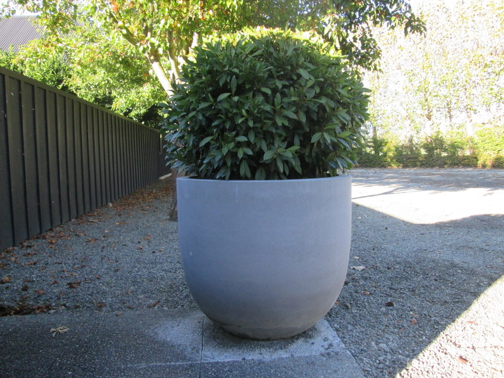 Classy Plants